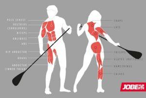 Jaké svaly zapojujeme při pádlování na paddleboardu